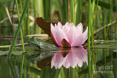 Aquatic Photograph - Pond Reflections by Judy Whitton