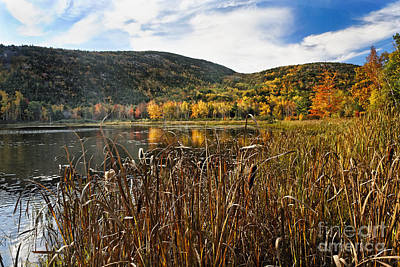 Pond With Autumn Foliage  Print by George Oze