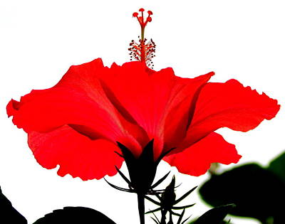 Pop Of Red Print by Ramona Johnston