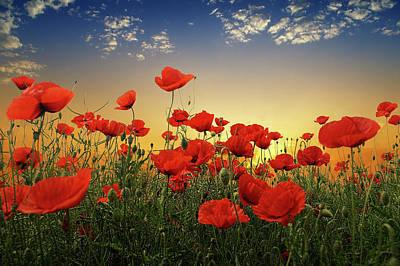 Poppies Original by Albena Markova