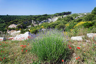 Poppies And Lavender In Bloom, Brac Print by Panoramic Images