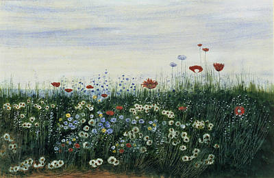 Blooming Drawing - Poppies, Daisies And Other Flowers by Andrew Nicholl