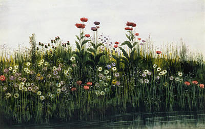 Meadow Drawing - Poppies, Daisies And Thistles by Andrew Nicholl