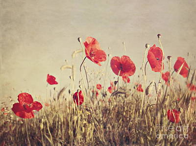 Red Flowers Photograph - Poppies by Diana Kraleva