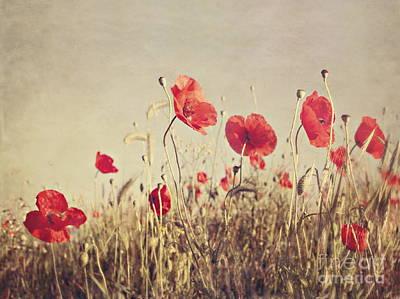 Poppy Digital Art - Poppies by Diana Kraleva