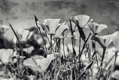 A Sunny Morning Photograph - Poppies In Mono by Georgia Fowler