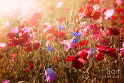 Poppies In Sunshine Print by Elena Elisseeva