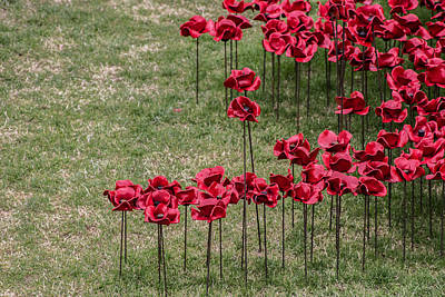 Citylife Photograph - Poppies by Martin Newman