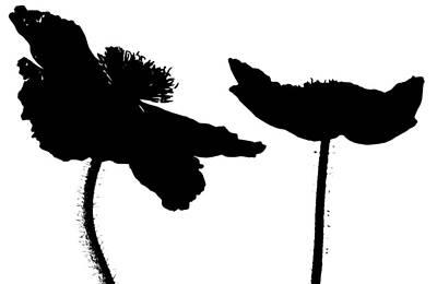 Flowers Photograph - Poppy Dance by Don Schwartz