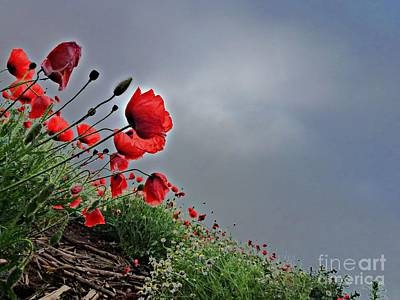 Poppy Field After Summer Storm Print by AmaS Art