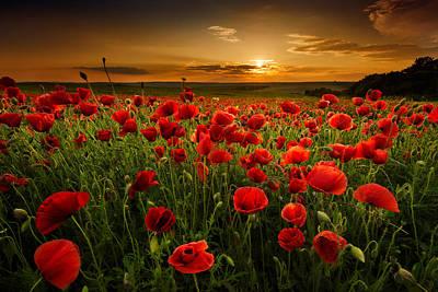 Poppy Field At Sunset Original by Evgeni Ivanov