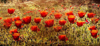 A Sunny Morning Photograph - Poppy Field by Georgia Fowler