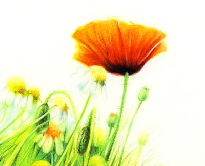Daisies Drawing - Poppy Flower by Natasha Denger