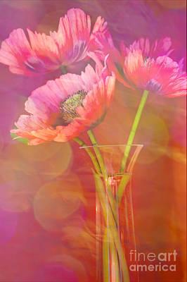 Poppy Passion Print by Jan Bickerton