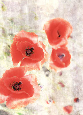 Poppy Three Print by JC Photography and Art