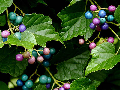 Leaf Photograph - Porcelain Berries by Lisa Phillips
