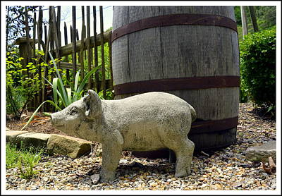 Rain Barrel Photograph - Pork Barrel by Kathy Barney