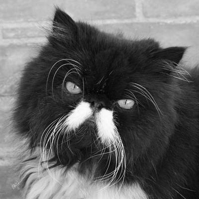 Portrait Of A Black Cat Print by Ben and Raisa Gertsberg