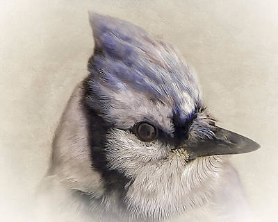 Manipulation Photograph - Portrait Of A Blue Jay by Tom York Images