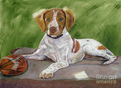 Portrait Of A Brittany Spaniel Print by Barb Kirpluk