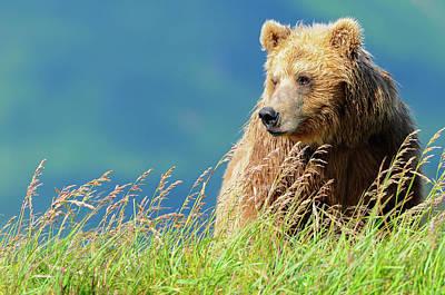 Bear Photograph - Portrait Of A Brown Bear  Portrait by Deb Garside