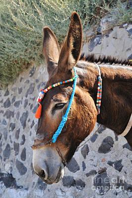 Portrait Of A Donkey Print by George Atsametakis