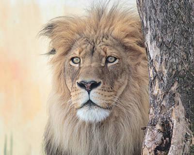 Portrait Of A Lion Print by Everet Regal