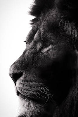 Glare Photograph - Portrait Of A Lion by Martin Newman