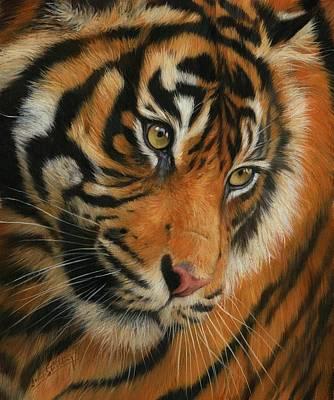 Oil Portrait Photograph - Portrait Of A Tiger by David Stribbling
