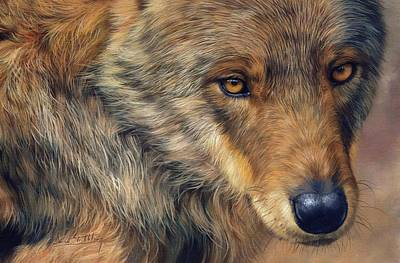 Portrait Of A Wolf Print by David Stribbling