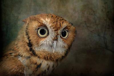 Portrait Of An Eastern Screech Owl Print by Jai Johnson