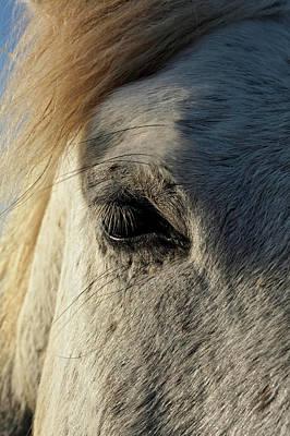 Horse Portrait Photograph - Portrait Of Camargue Horse, France by Adam Jones