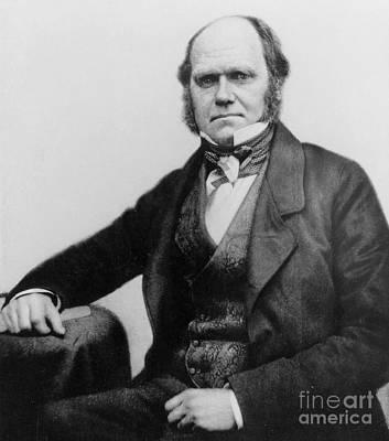 Portrait Of Charles Darwin Print by English Photographer