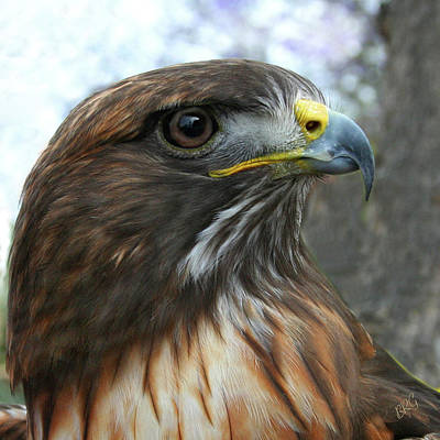 Red-shouldered Hawk Photograph - Portrait Of Red-shouldered Hawk by Ben and Raisa Gertsberg
