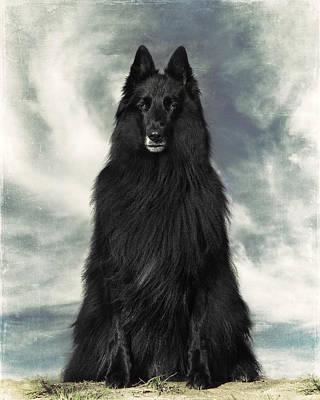 Belgian Sheepdog Photograph - Portrait Of Wolfcub Belgian Shepherd Groenendael by Wolf Shadow  Photography