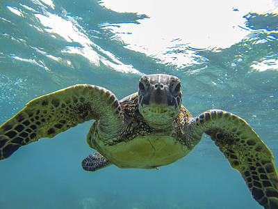 Face Photograph - Posing Sea Turtle by Brad Scott