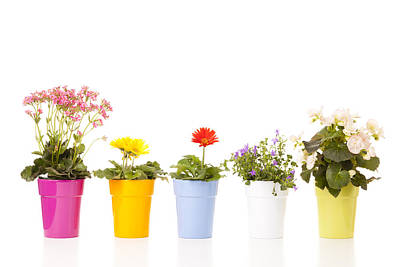 Potted Flowers Print by Alexey Stiop