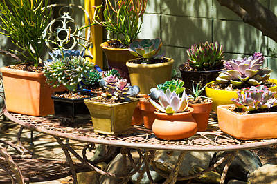 Sunlight On Pots Photograph - Potted Succulents  by Bernard  Barcos