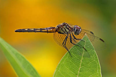 Darter Photograph - Power And Poise by Juergen Roth