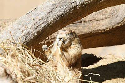 Dog Photograph - Prairie Dog - National Zoo - 01136 by DC Photographer