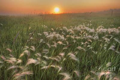 Alberta Prairie Landscape Photograph - Prairie Foxtails by Dan Jurak