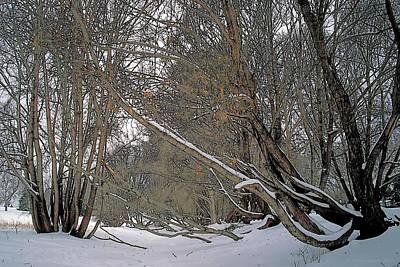 Prairie Winter 2 Print by Terry Reynoldson