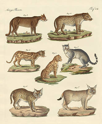 Cheetah Drawing - Predators From All Parts Of The World by Splendid Art Prints