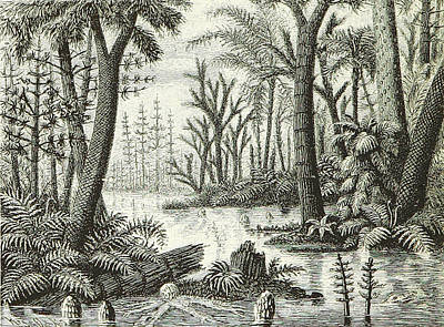Print featuring the photograph Prehistoric Flora, Carboniferous by British Library