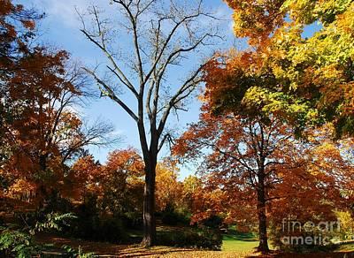 Of Autumn Photograph - Premature Leaf Termination by Mel Steinhauer
