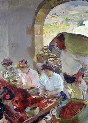 Preparing The Dry Grapes Print by Joaquin Sorolla y Bastida