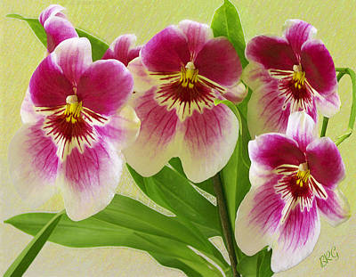 Pretty Faces - Orchid Print by Ben and Raisa Gertsberg