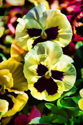 Stylized Photograph - Pretty Pansies by Jeanne May