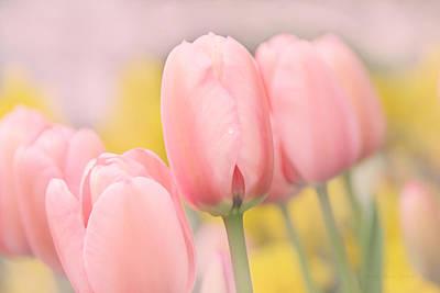Pretty Pastel Pink Tulip Flowers Print by Jennie Marie Schell