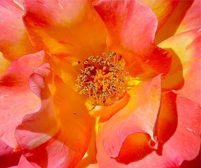 Pretty Petals Print by Denise Mazzocco
